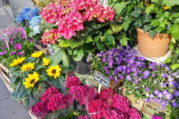 Blumen zum Muttertag?